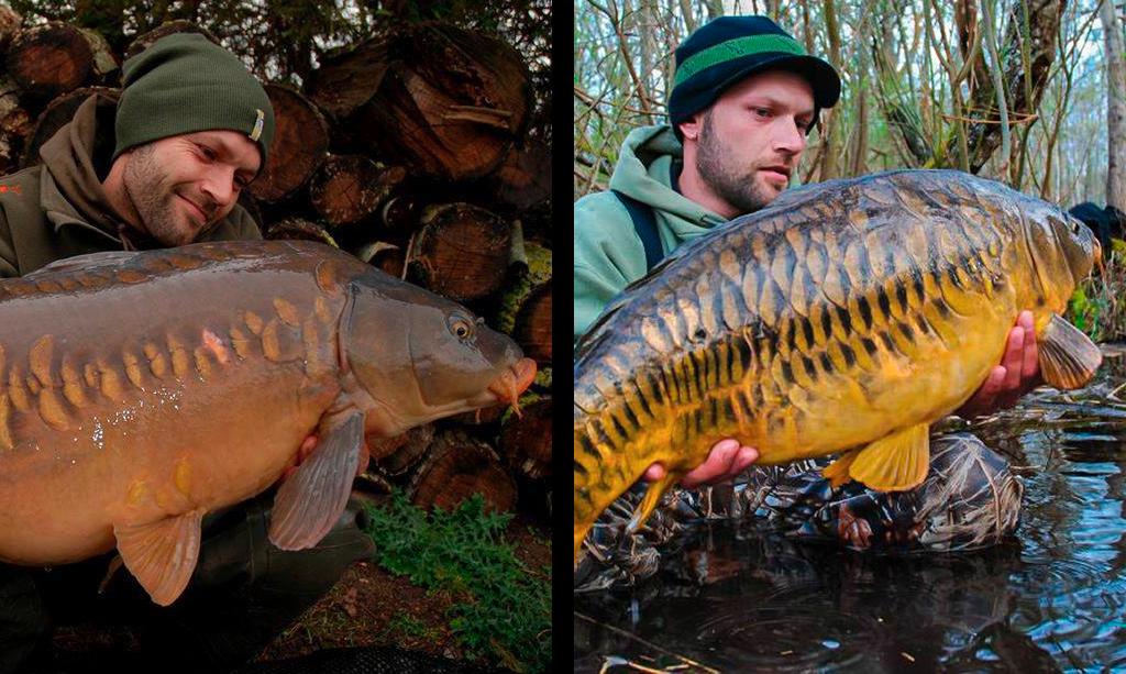 on-s-en-fish-header-interview-nicolas-levine-fox-france-photo-carpe-1