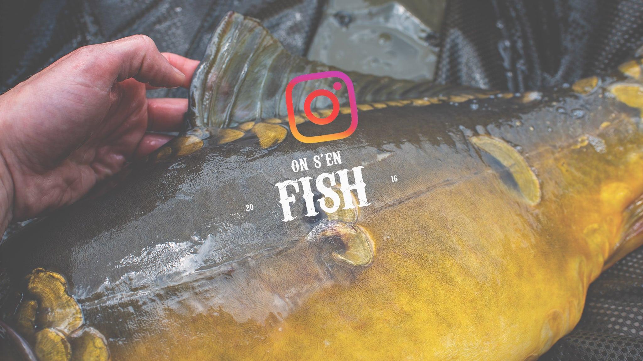 on-s-en-fish-header-carpstagram-26